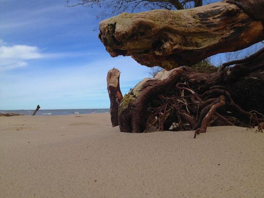 Treibholz und Strandsand
